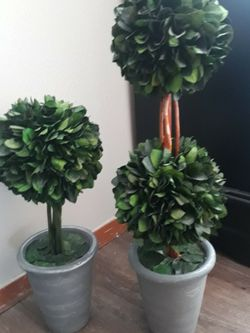 Cute Topiaries for Sale in University Place,  WA