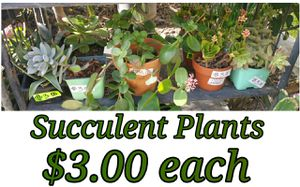 Succulent plants for Sale in Hacienda Heights, CA