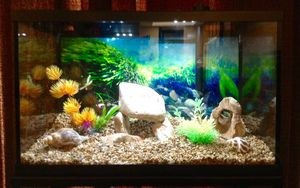 10 Gallon Aquarium Setup with LED lighting for Sale in Dublin, OH