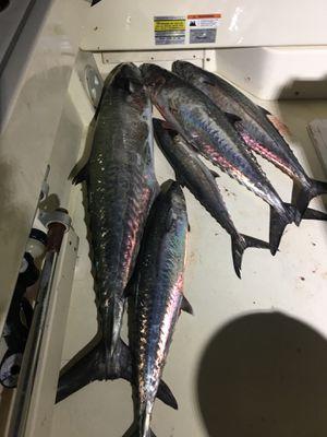 Kingfish for Sale in Deerfield Beach, FL