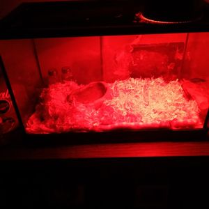Snake Tank With Lamp for Sale in Bradbury, CA