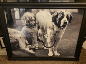 St. Bernard photo for Sale in Canonsburg, PA