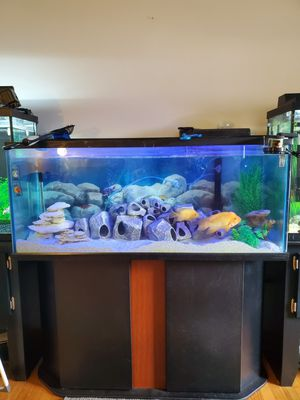 75 gallon aquarium w/ cabinet stand and hanging back filter (Marineland) for Sale in Romeoville, IL