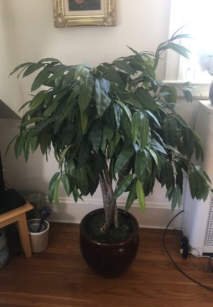 Fake plant for Sale in Providence, RI