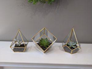 Live succulent arrangements for Sale in Annandale, VA