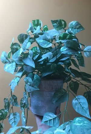 Decorating plant for Sale in Casselberry, FL