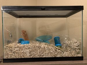 Happy Hamster seeking forever home! for Sale in Federal Way, WA