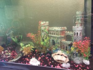 Fish tank with all decorations included for Sale in Stockton, CA