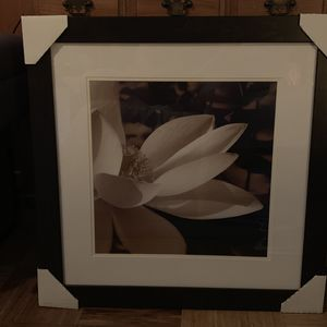 Two Beautiful Lily Pictures! for Sale in Stratford, CT