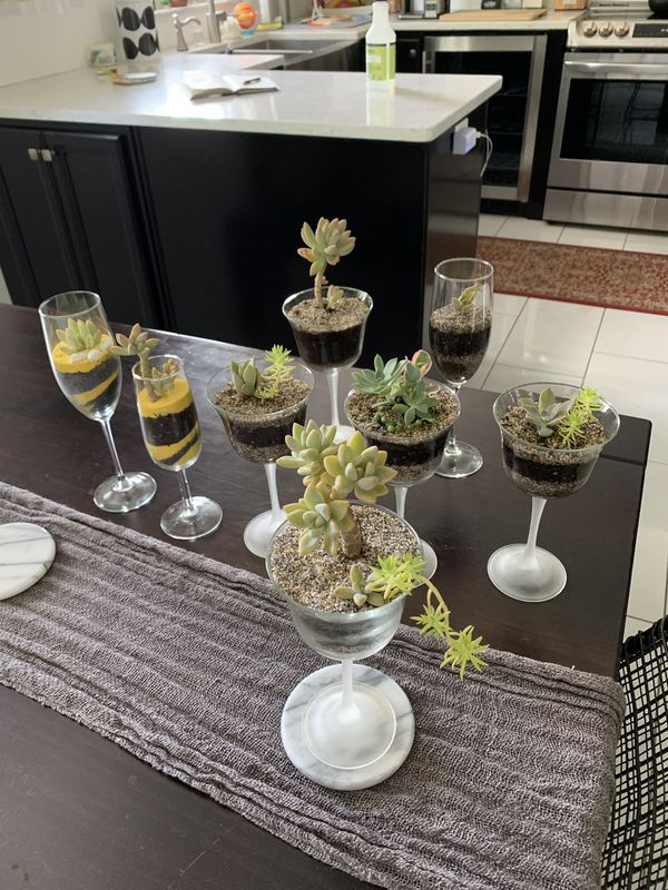 Succulent wine glasses/flutes arrangements