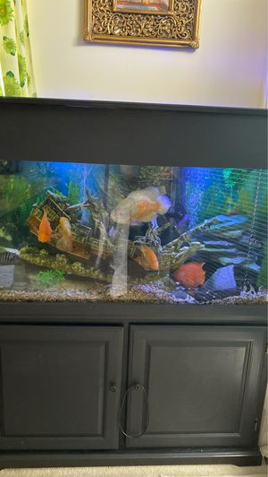 Aquarium 90 g all set whit beautiful healthy fishes for Sale in Bartlett, IL
