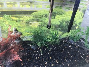 Fish aquarium with decor and other accessories (20 gallon) for Sale in Gresham, OR