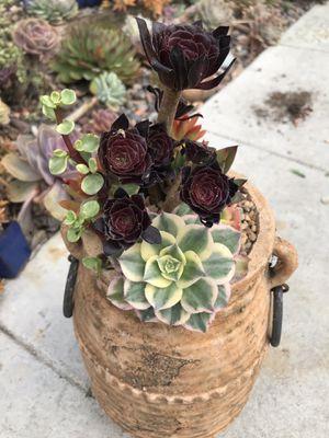 Succulent pot arrangement for Sale in Los Angeles, CA
