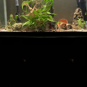 Fish Tank With Stand for Sale in Snohomish, WA