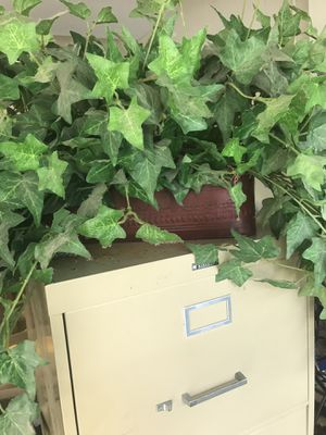 Ivy and container for Sale in Tampa, FL