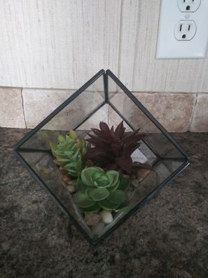 Price drop! Succulent craft for Sale in Saint Cloud, FL
