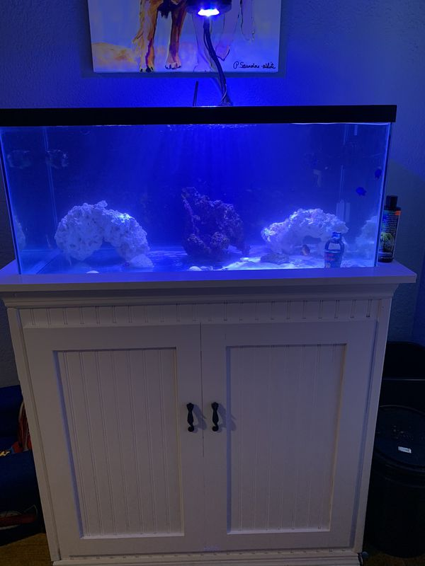 Custom DIY 40 gallon saltwater fish tank