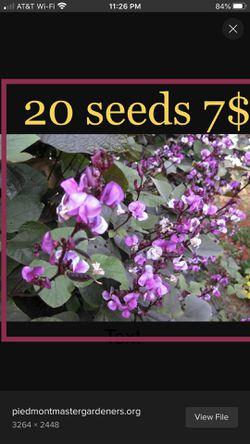 Hyacinth Seeds for Sale in Aubrey,  TX