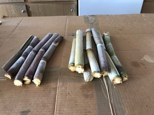 Sugar Cane for Sale in Chino, CA