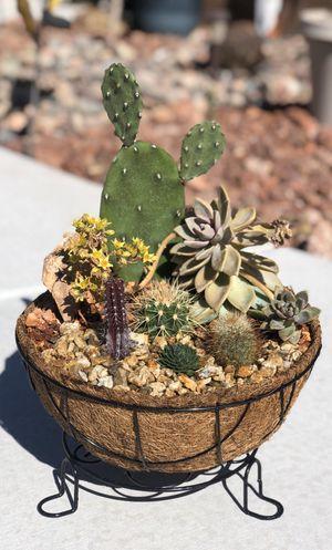 🌵 LIVE cactus/succulent pot 🌵 for Sale in North Las Vegas, NV