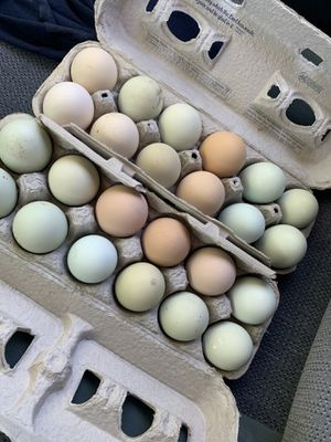 Incubated Eggs / chicks / pollitos for Sale in Fontana, CA