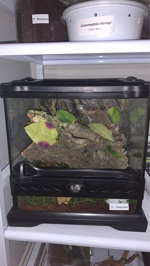 Exo Terra Nano Wide Tank for Sale in Queens, NY
