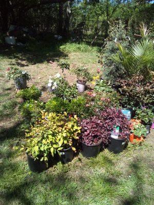 Flowers , shrubs and trees for Sale in Mill Creek, OK