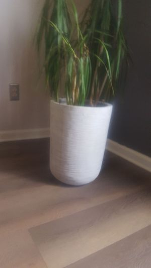 Large Plant pot for Sale in Columbus, OH