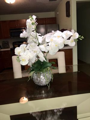 White Orchids for Sale in Hialeah, FL
