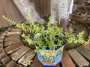 Gardening for Sale in Phoenix, AZ