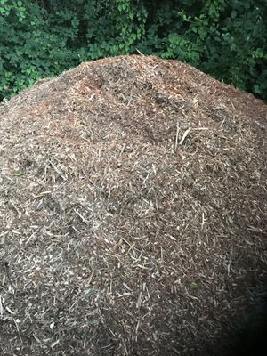 Wood chips/mulch for Sale in Tacoma, WA