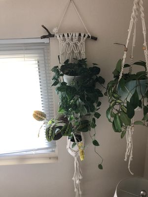 Double macrame plant hanging for Sale in La Mesa, CA