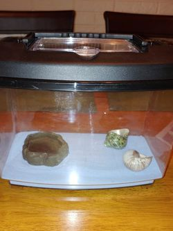 Hermit Crab Tanks for Sale in Clearwater,  FL