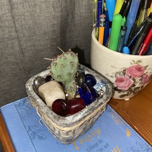 Opuntia Cactus In Ceramic Pot For Collectors for Sale in South Gate, CA