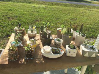 Plantadevidafl for Sale in Winter Haven,  FL