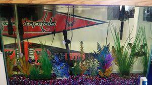 45 gallon aquarium for Sale in FAIRMOUNT HGT, MD