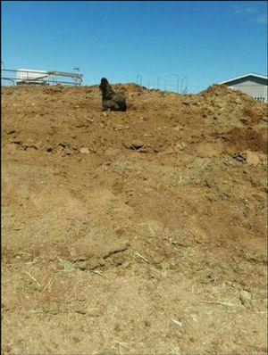 Garden compost from goats as manure fertilizer for Sale in San Tan Valley, AZ