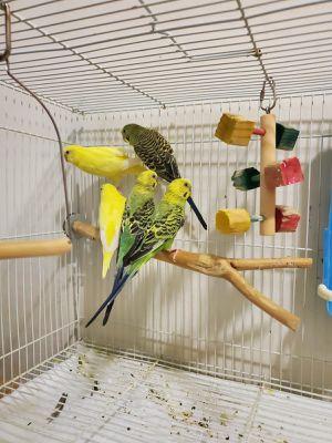 Cage bird for Sale in Burtonsville, MD