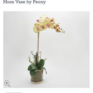 Real Touch Orchid Plant in a Wooden Moss Vase by Peony for Sale in Bakersfield, CA