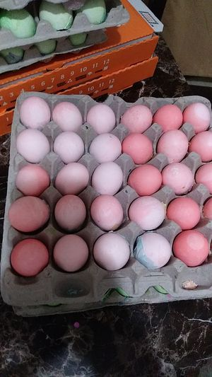 Easter eggs running out for Sale in Donna, TX