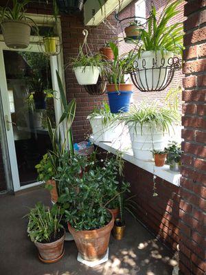 Beautiful indoor/outdoor plants for Sale in NEW KENSINGTN, PA