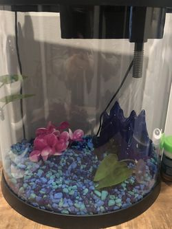 Fully Set Up 3.5 Gallon Fish Tank + Gravel, Decor, Food, and Net for Sale in Brooklyn,  NY