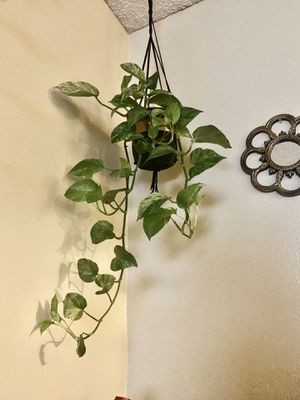 Hanging Ceramic pot plant not included for Sale in Fontana, CA