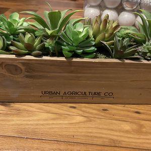 Faux Succulent Garden for Sale in Glendale, AZ