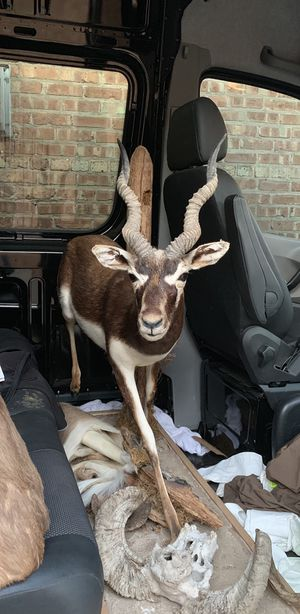 Taxidermy for Sale in Chicago, IL