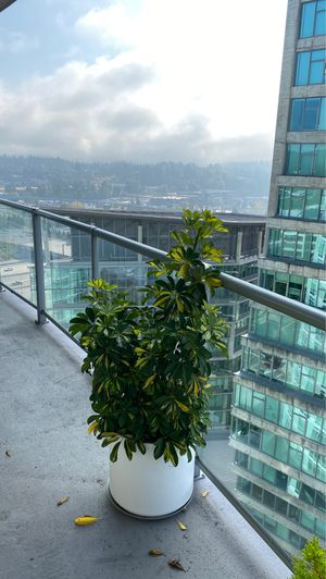 Potted plant for Sale in Bellevue, WA