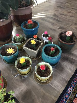 40% off if you buy all the cactus together. They are cute pots get a huge discount for all for Sale in Las Vegas, NV