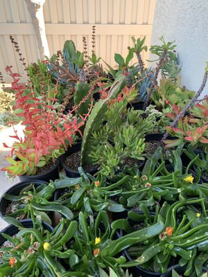 Beautiful succulent and cactus plants for Sale in Spring Valley, CA