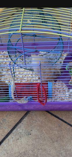 Hamster, Cage, Food for Sale in Fort Lauderdale,  FL