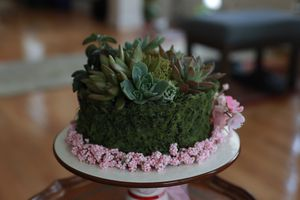 Succulent Home or Office decor for Sale in Falls Church, VA